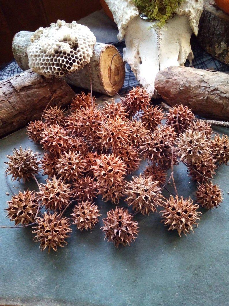 100 Sweetgum Balls Spiky Balls Alien Pods Witch Burr Etsy In 2020 Terrarium Wedding Sweet Gum Nature Decor