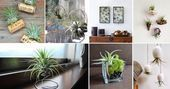 Photo of 51 Most Amazing Air Plant Display Ideas,  #air #Amazing #Display #diygardeneasyp…