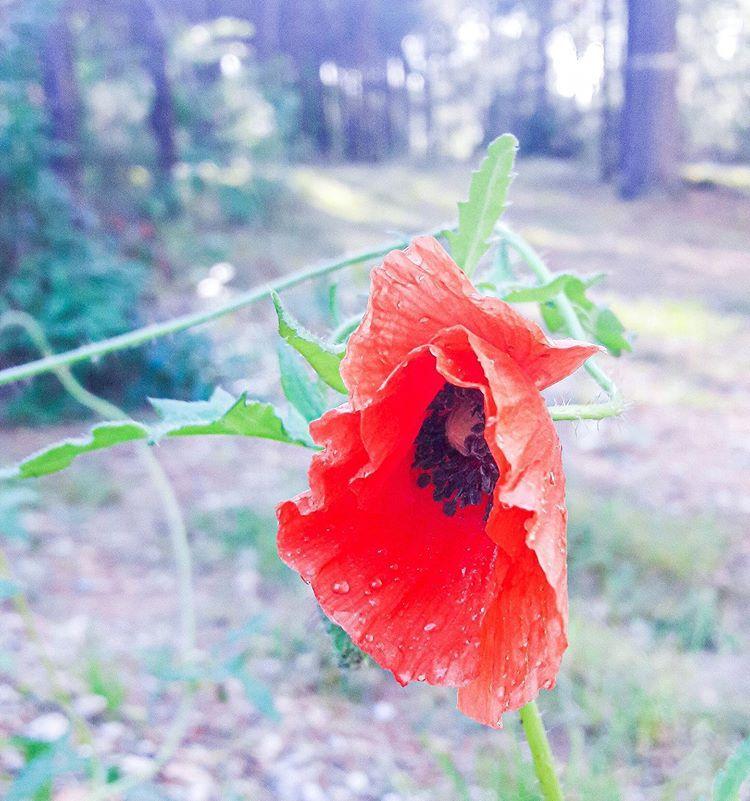 Gosia Miejska Ogrodniczka Na Instagramie Kto Z Nas Nie Kocha Makow Dzis Z Okazji Walentynek Wybralam Wlasnie Maki Jako Moj Dzisi Flowers Instagram Plants