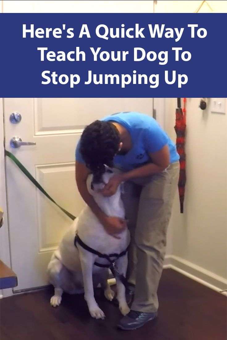 Stop Your Dog From Jumping Up Dogs Your Dog Dog Training
