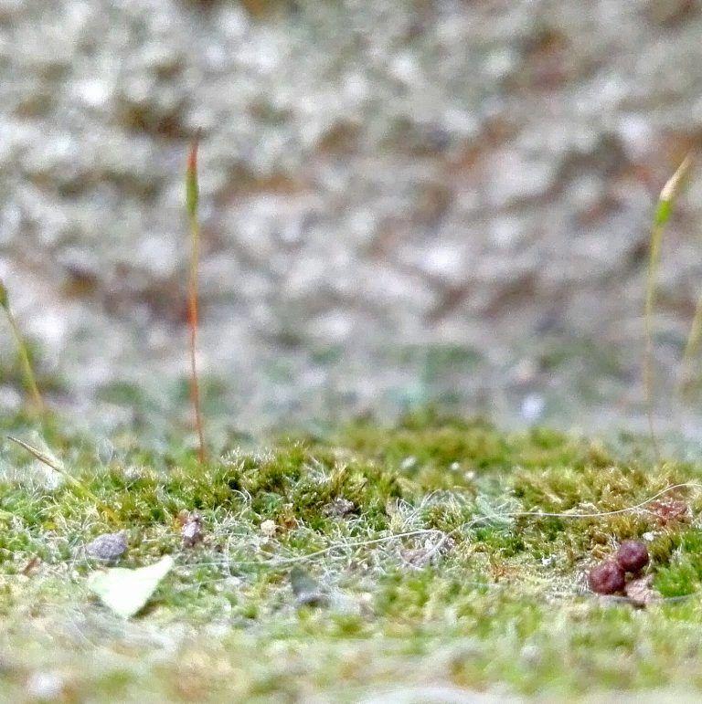 Anti Mousse Naturel Une Recette Au Bicarbonate De Soude Anti Mousse Naturel Mousse Bicarbonate De Soude