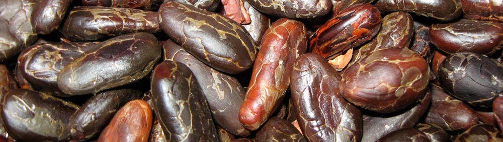roasted_beans.jpg
