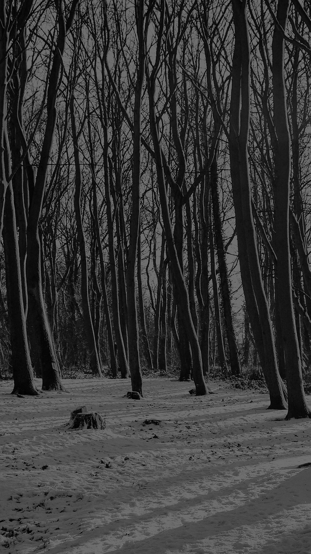 cold winter forest snow nature mountain dark iphone 6 plus