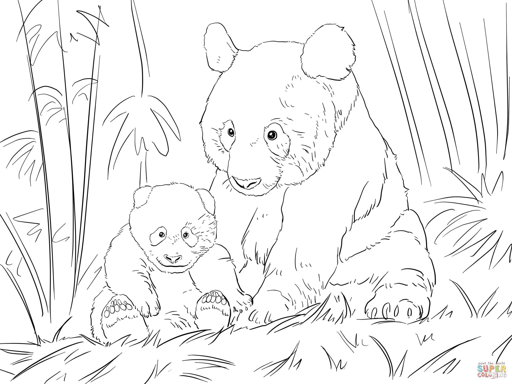cute panda family super coloring
