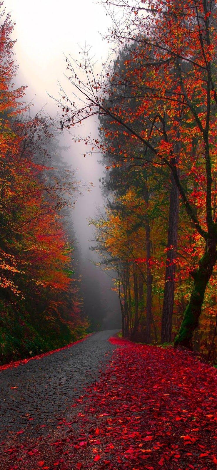Autumn Rain Hd Wallpaper Autumn Rain Seasons Autumn Day