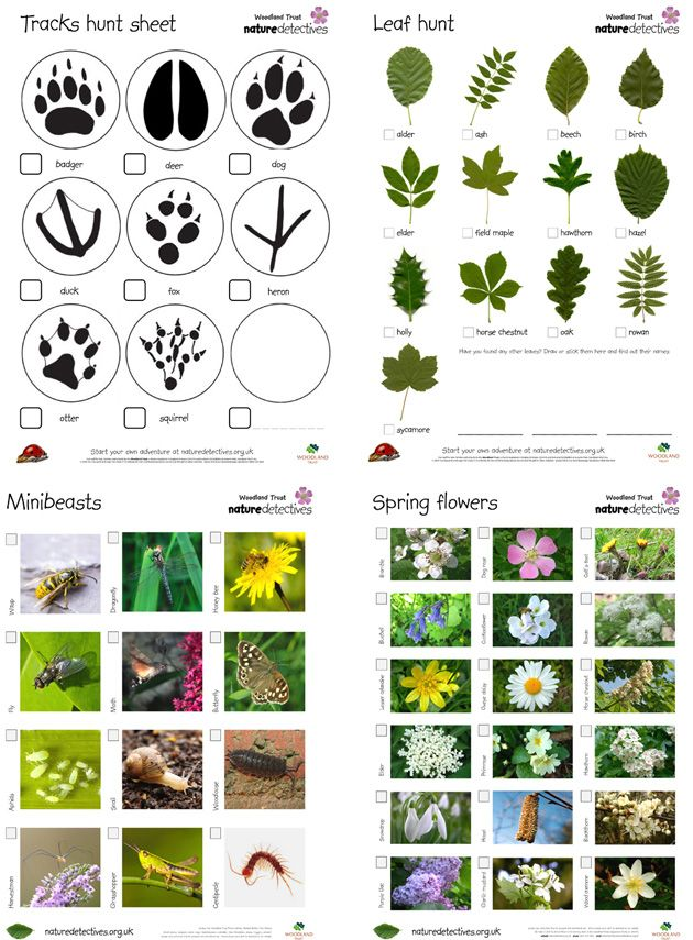 Luontoetsivät: tehtävänä etsiä esim. tiettyjä lehtiä/puita/eläinten jälkiä / kasveja / tietyn värisiä tai muotoisia asioita