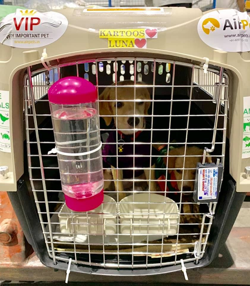 Kartoos Luna Traveling From New Delhi India To Montreal Canada Pet Travel Pet Relocation Pet Shipping
