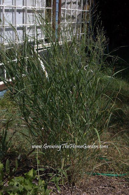 Growing The Home Garden: Gardening in the Home Landscape: Drought Tolerant Garden Plants