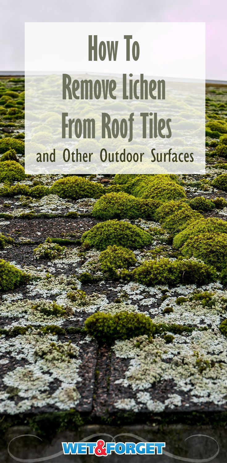 How To Easily Remove Lichen On Outdoor Surfaces Wet Forget Blog How To Remove Outdoor Outdoor Cleaning