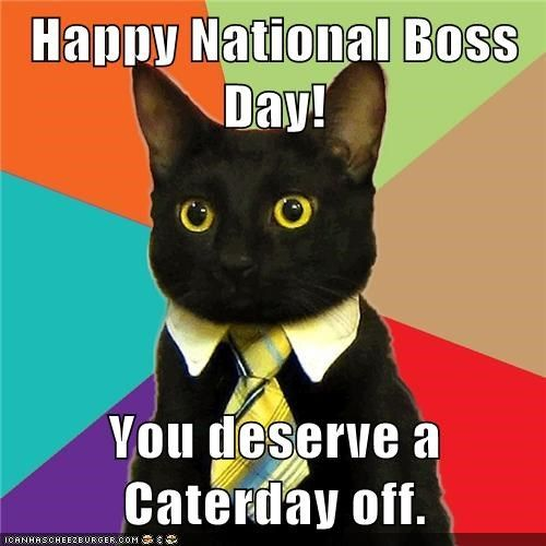 Boss Day Pictures Images Photos Business Cat Meme Business Cat Funny Cat Memes