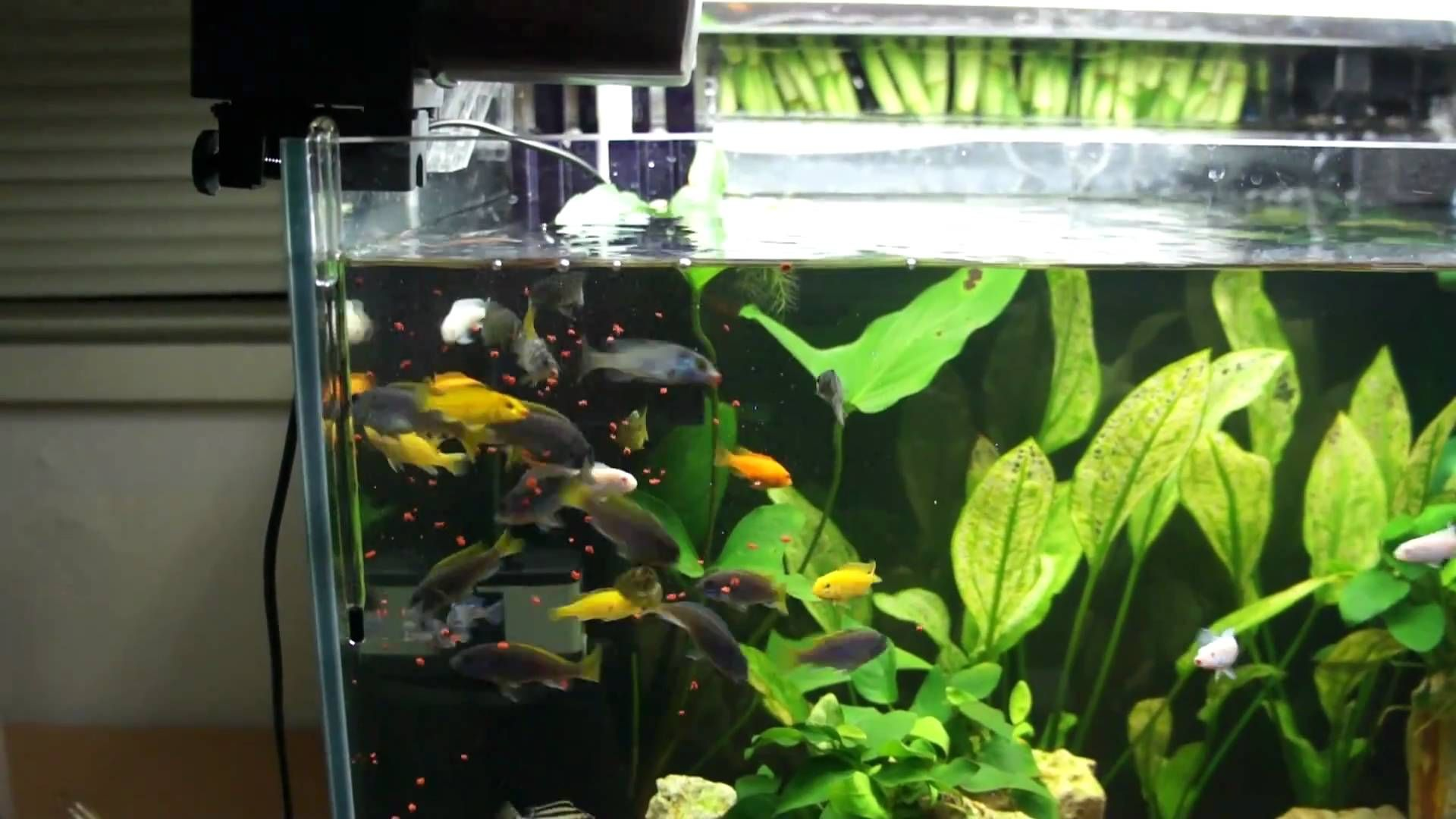 Best Automatic Fish Feeders No Vacation Worries Fish Feeders Automatic Fish Feeder Home Aquarium