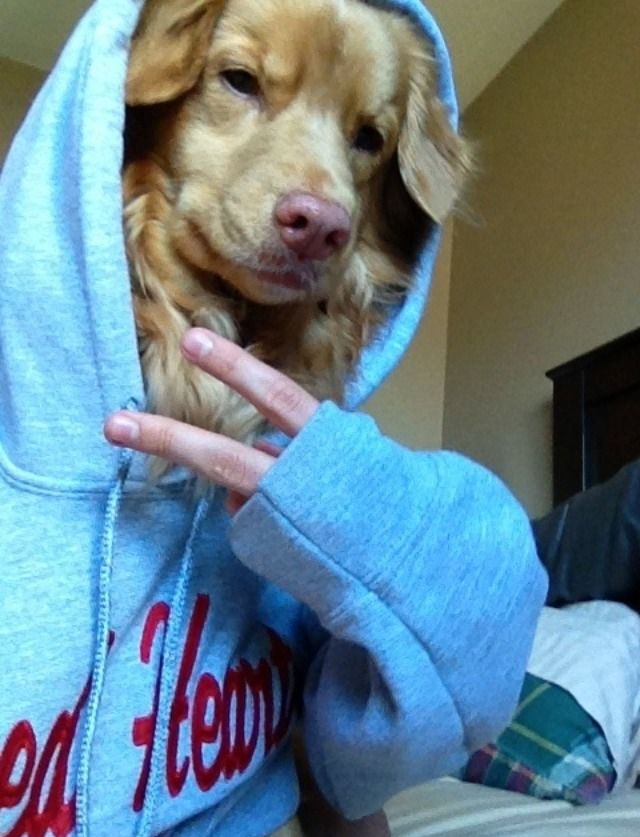 21 Animal Selfies That Are Shutting It Down Funny Selfies Dog Selfie Funny Animals