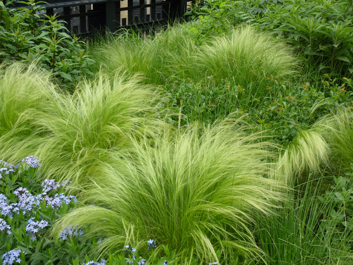 Oudolf high line new york ny nasella for Grassy plants for landscaping