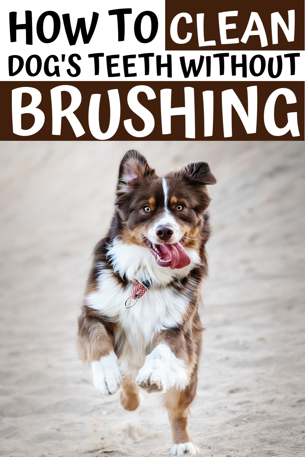 How To Clean Dog S Teeth At Home In 2020