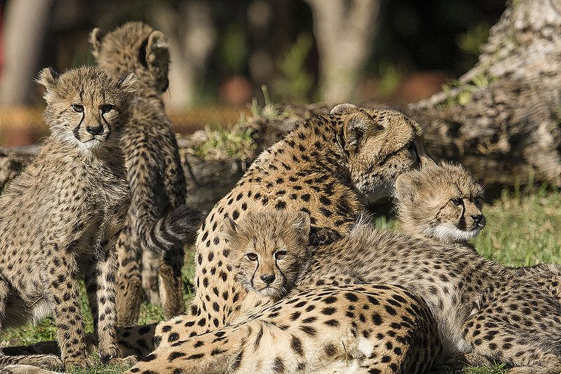 Pin On Animal Moms And Their Babies