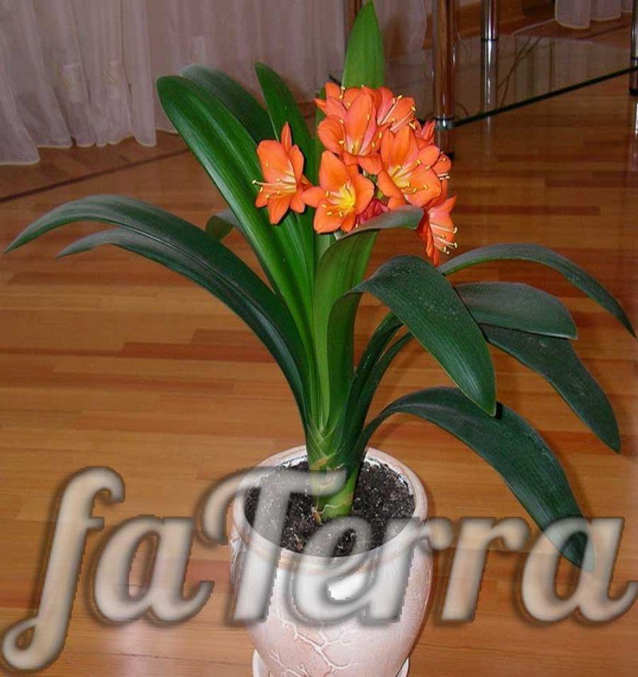 цветы композиция фото винтаж