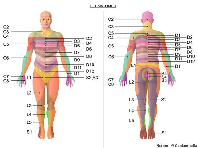 Dermatomes & Myotomes - Google Search | Physiotherapy ... Upper Extremity Myotomes