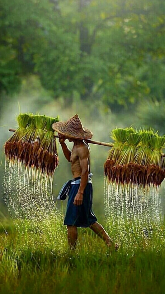Pin By Lilli On Rice Field Terrace Good Morning Images Morning Images Pet Friendly Vacations
