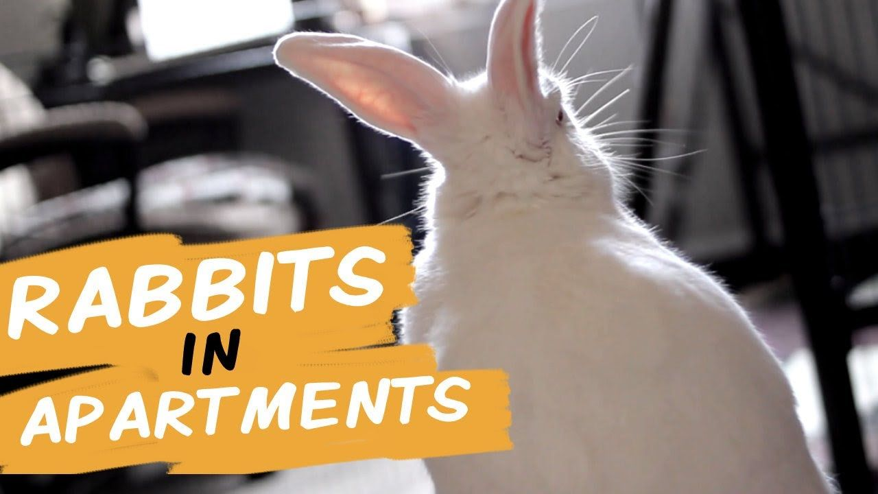 Rabbit Apartment Rabbithouses Rabbit Lover Rabbit Things To Sell