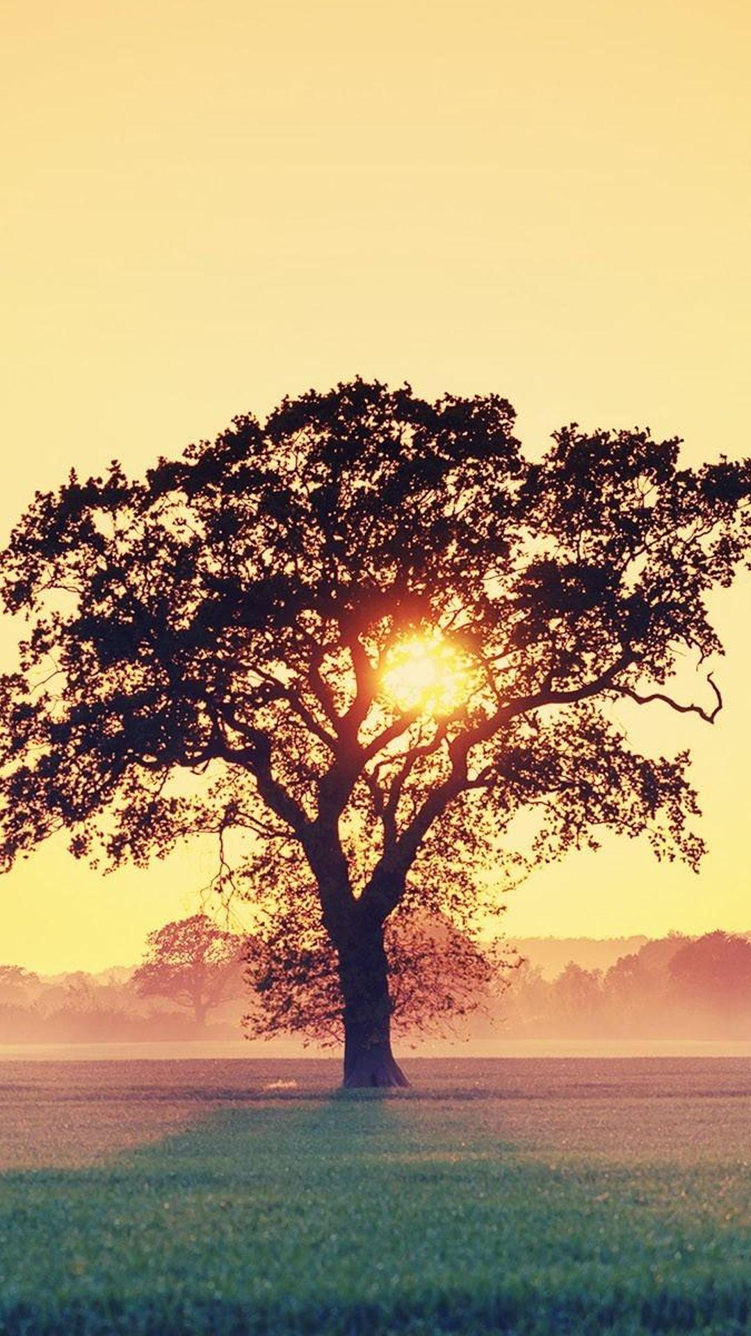 Countryside Tree Sunset iPhone 6 wallpaper Sunset