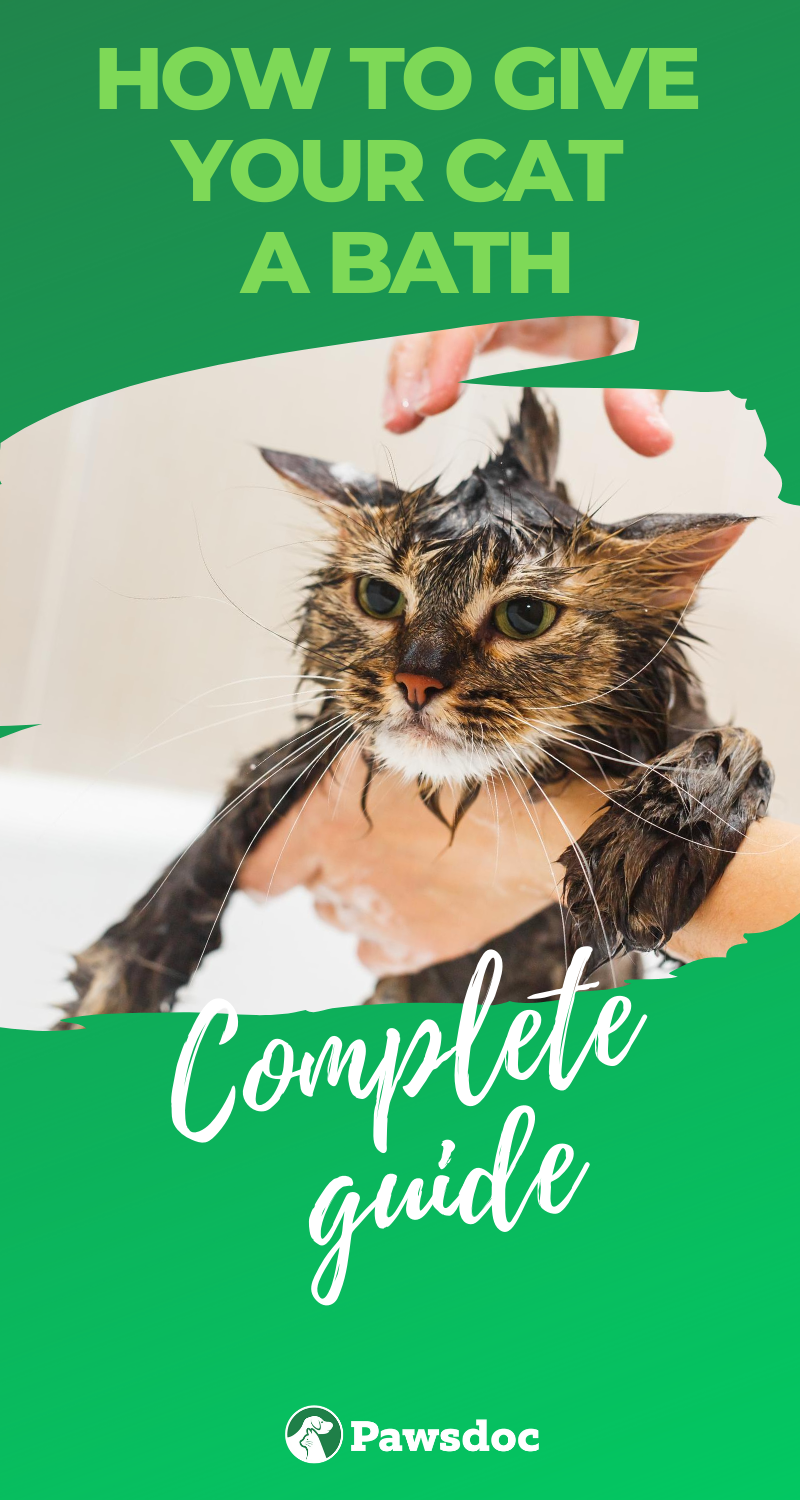 How To Bathe A Cat Without Scratches Step By Step Guide In 2020 Cats Kitten Care Kitten Proofing
