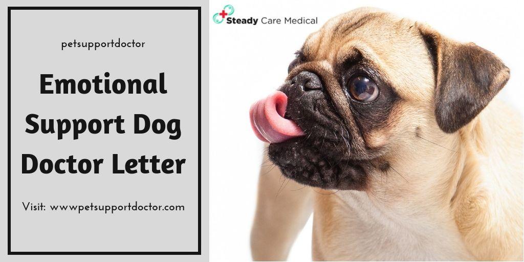 Emotional Support Dog Doctor Letter Dog doctor