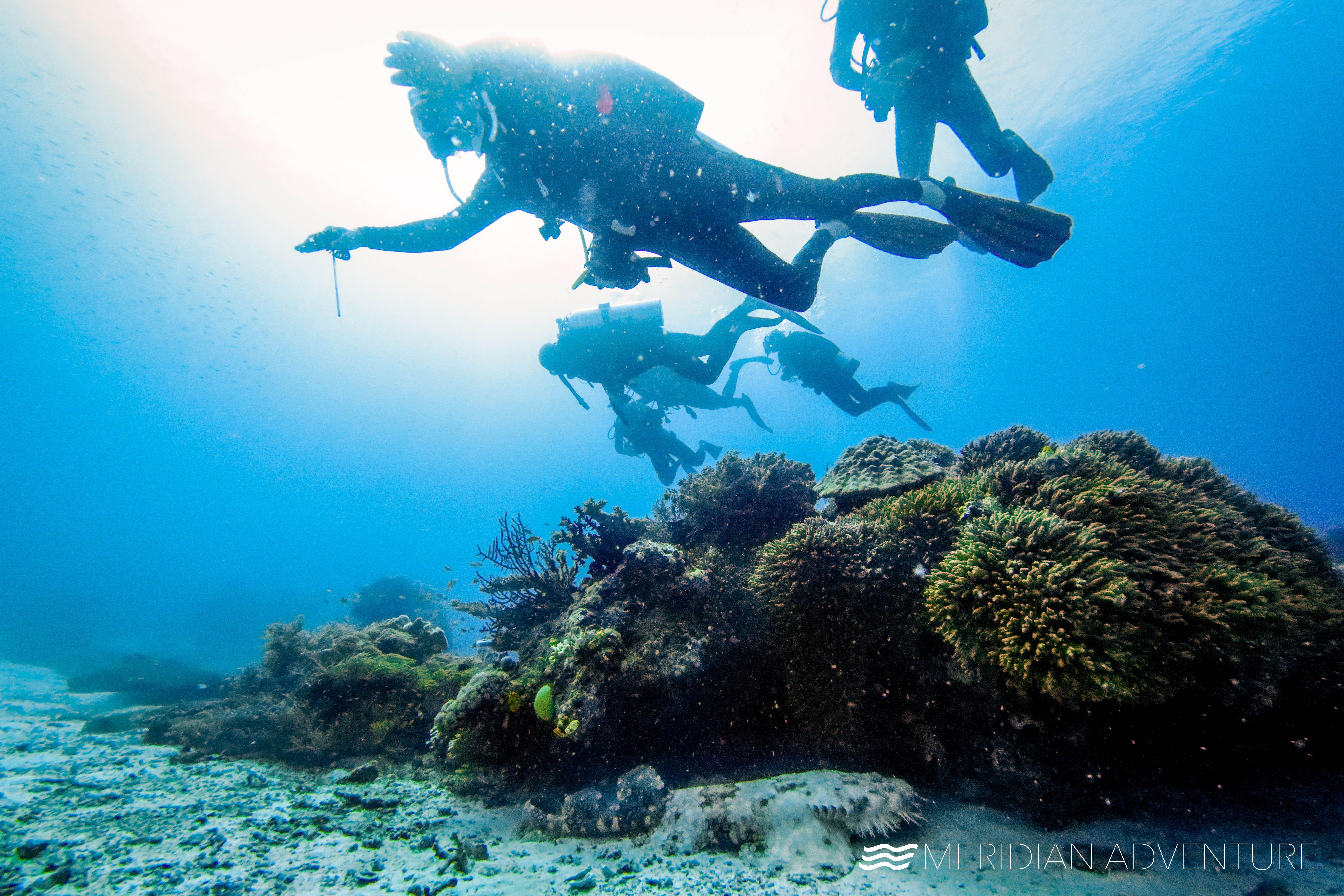 Pin By Meridian Adventure Dive Resort On Future Job In 2020 Marina Resort Scuba Diving Diving