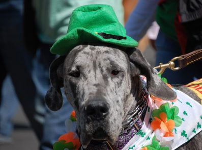 Your Guide to the Greater Hartford St. Patrick's Day Parade 2014
