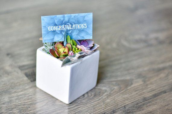 Congratulations Succulent Gift For Office New Job Friend Birthday Succulents Teacher T
