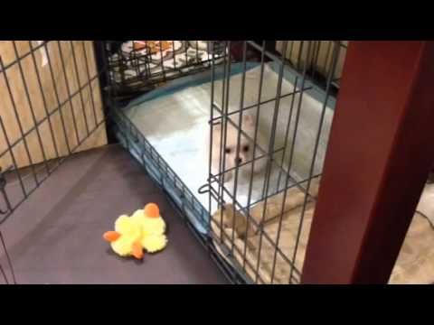 Puppy Training For Sparkle Click Here To Watch Our World Famous Potty Video Modernpuppies