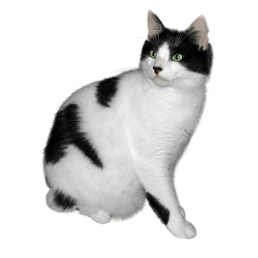 Black And White Cat Free Png Stock By Janeeden Cute Icons Cats Png