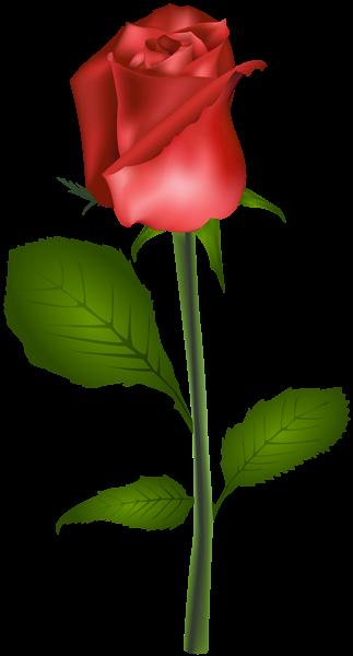 Red Rose Transparent Clip Art Image Rosas