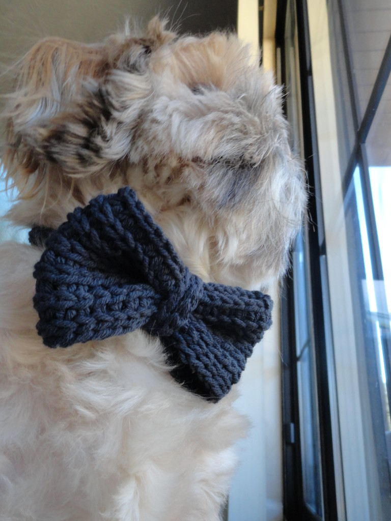 Buster's Knitted Bow Tie   Bowtie pattern, Knitting ...