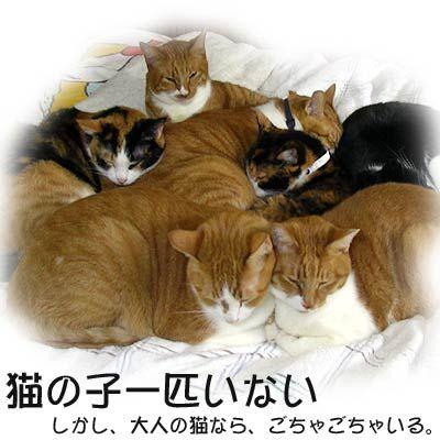 "Japanese phrase 猫の子一匹いない neko no ko ippiki inai ""Nobody is.There is no sign.   "" Neko is a cat."