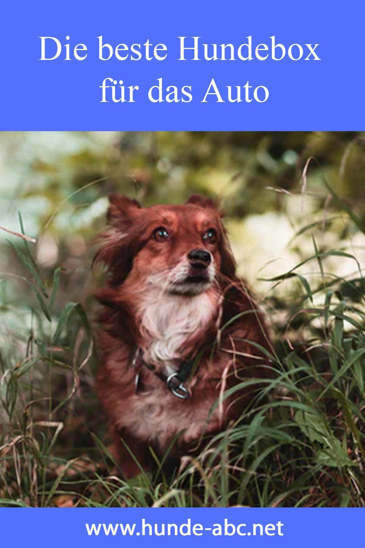 Die Beste Hundebox Fur Das Auto In 2020 Hunde Hundebox Hundebox Furs Auto