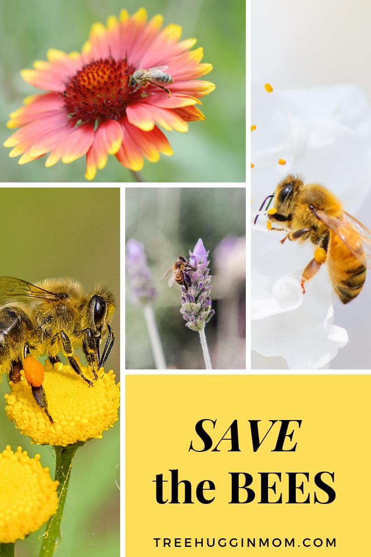Pin on Gardening and Wildlife