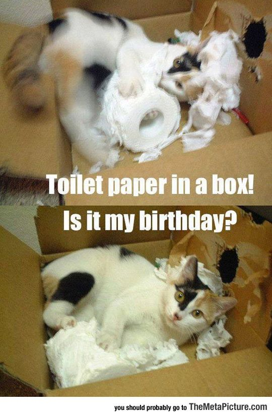 Thin Toilet Paper Humor