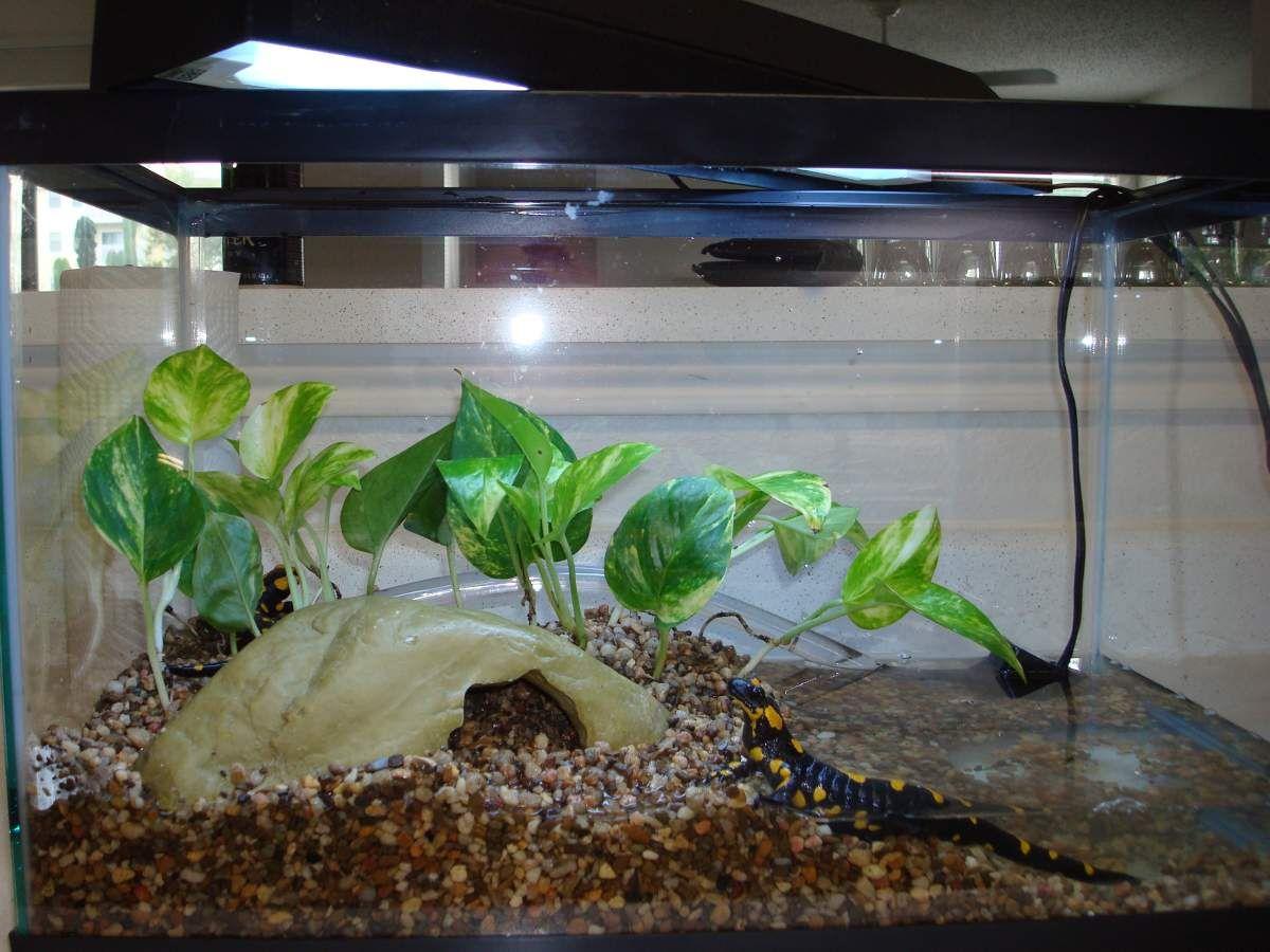 Salamander Terrarium Salamandra Enclosure Picture 183
