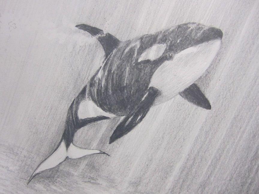 Orca drawing | Drawings | Pinterest | Zeichnen, Zeichnungen und Tier