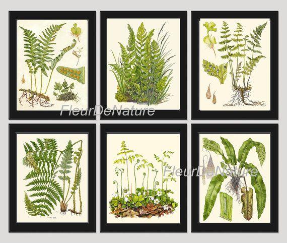 FERN Print SET of 6 Botanical Art Print 8X10 by FleurDeNature