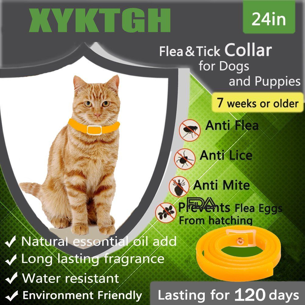 Xyktgh Flea Tick Collar With Essential Oil Prevention For Dog And Kitten Cat Water Resistant 4 Month Protection Pet Collar Cat Fleas Flea And Tick Pet Collars