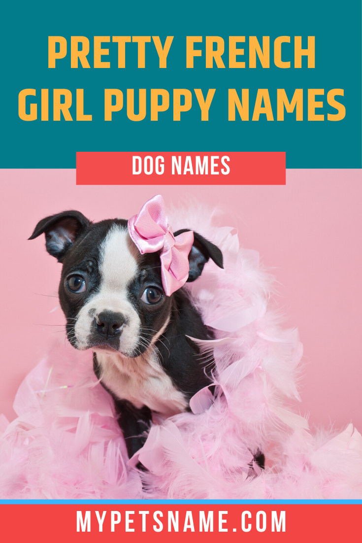 French Names For Female Dogs Are Classic And Cute And Inspiration Can Be Taken From Anything From French Female