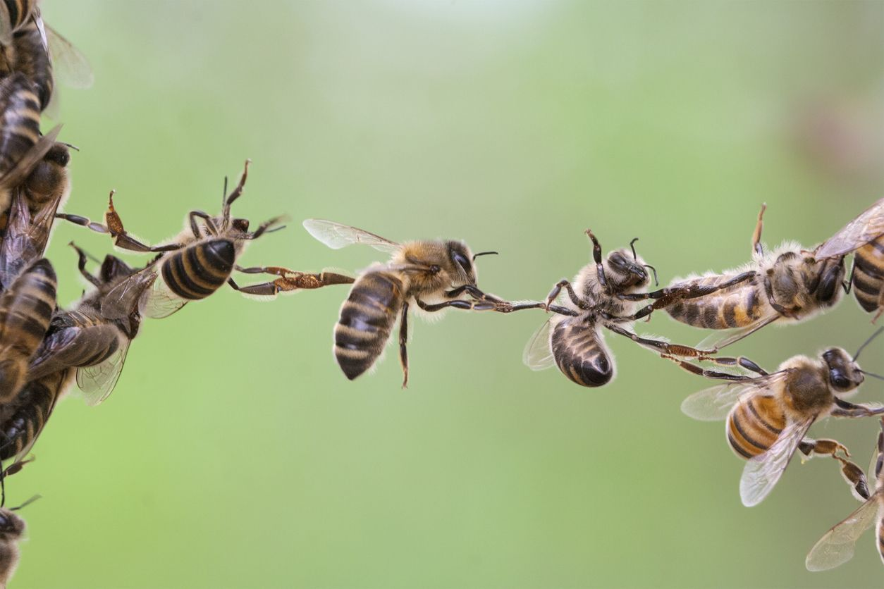 Love Food Love Bees Beeing Helpful Year 5 6 Social Strategy Bee Bee Swarm