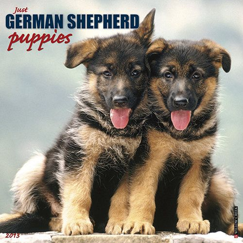 Just German Shepherd Puppies Wall Calendar Before Transforming