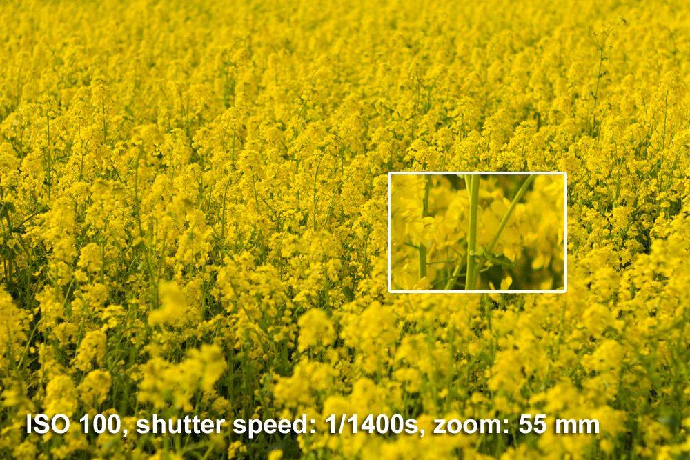 Canon Eos 60d 18 135 Mm Sample Images Photo Canola Field Stock Photos