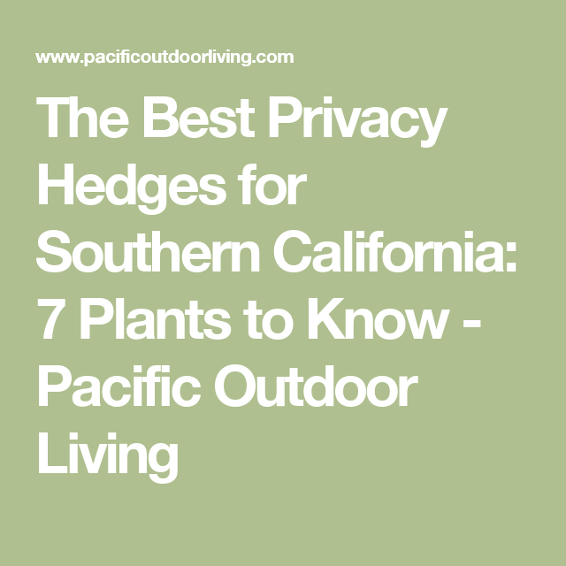 The Best Privacy Hedges For Southern California 7 Plants To Know Pacific Outdoor Living