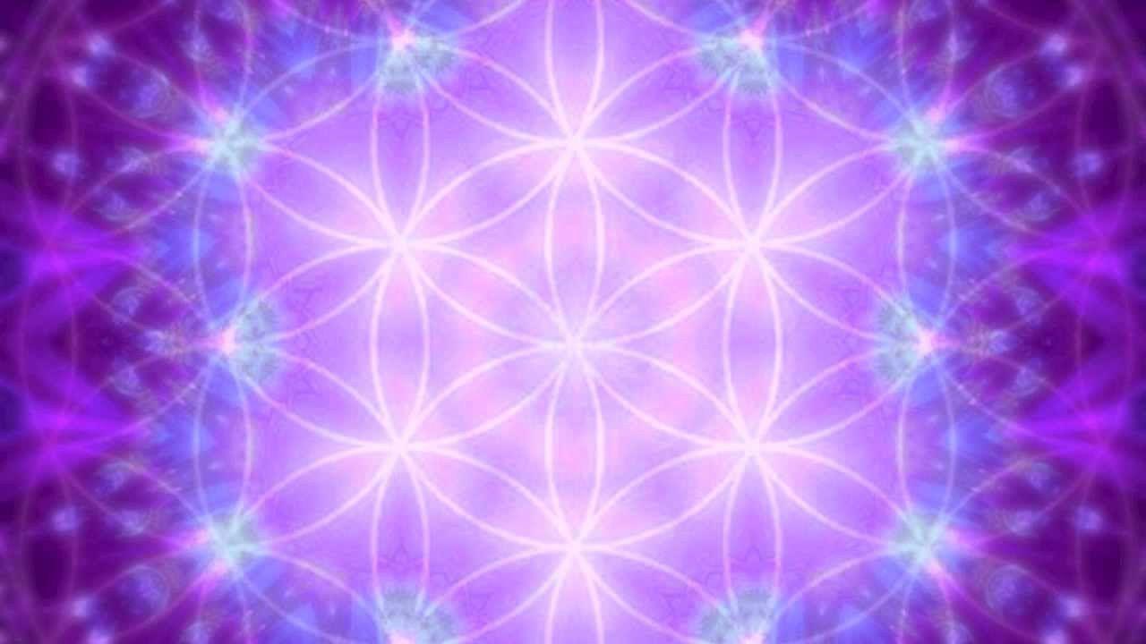 Llama violeta reiki pinterest llama violeta buycottarizona Gallery
