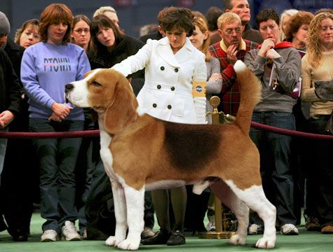 This Is One Very Large Dog Can Any One Tell Me What Breed This Is