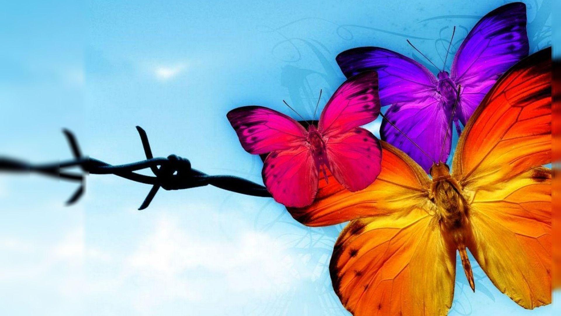 butterfly a· butterfly wallpaper hd free