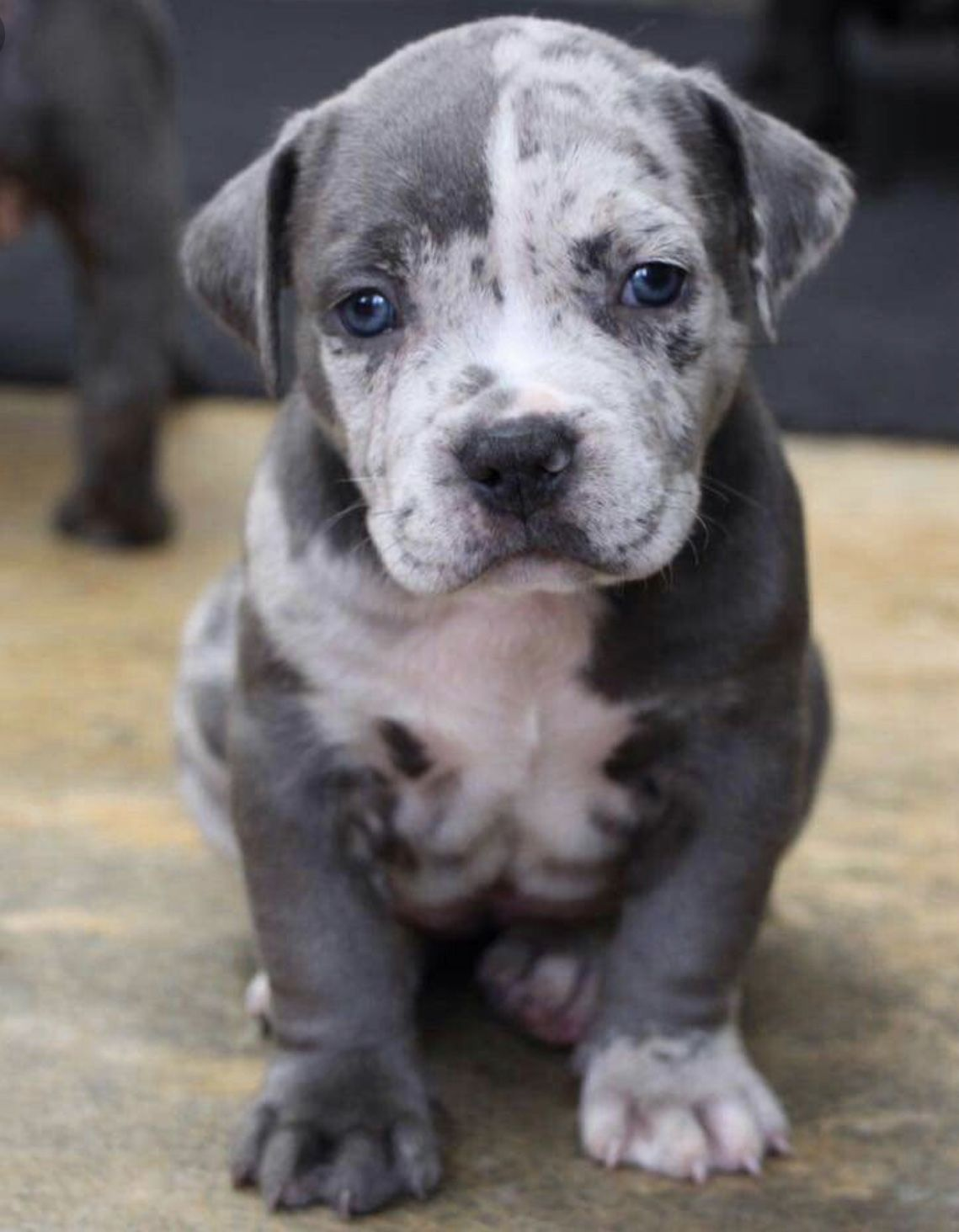 All About The Fur Babies Image By Stacey Wilson Pitbull Mix